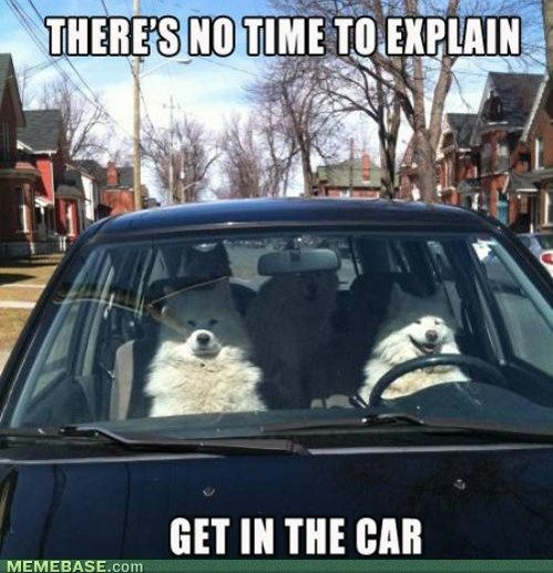 haha I love dogs: Families Roads Trips, Pet, Cars Riding, Dogs Humor, Samoyed Dogs, No Time, Happy Dogs, Funny Memes, Animal