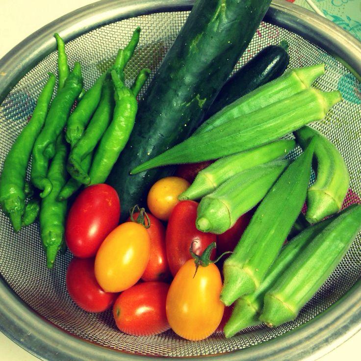 無農薬新鮮野菜♡