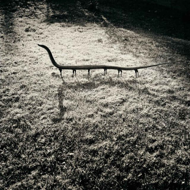 "In attack position From the photobook ""The Nature of Photography, The Photography of Nature"" © Joan Fontcuberta."