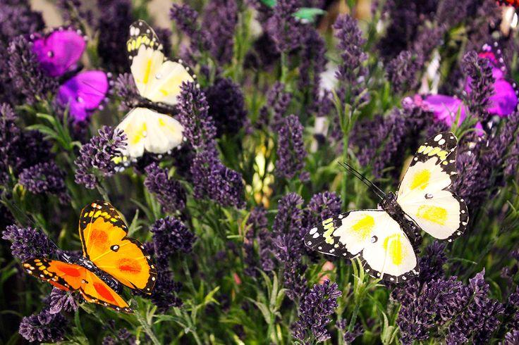 #Farfalle e #lavanda da #Naturalmente.