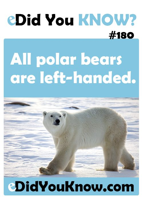 All polar bears are left-handed. http://edidyouknow.com/did-you-know-180/