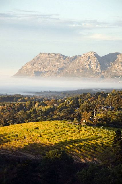 Vineyards and Mountains - Franschoek, Western Cape / South Africa