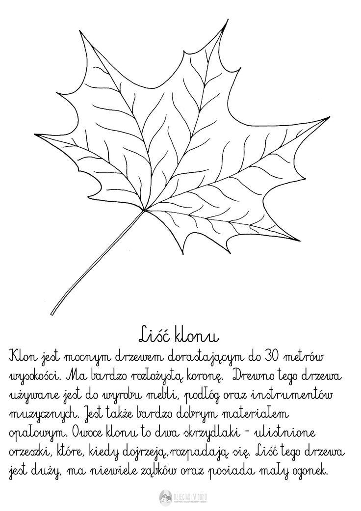 Liście drzew… szablony i karty pracy | Dzieciaki w domu