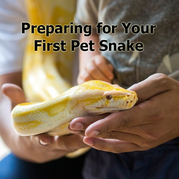 So you're thinking about getting a pet #snake. Make sure you're fully prepared.