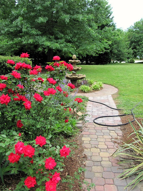 Best Fan Photos Images On Pinterest Knockout Roses Flowers