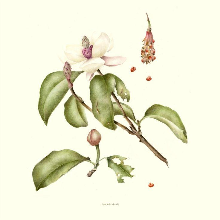 Bedgebury Pinetum Florilegium Society - Julie Spyropolous