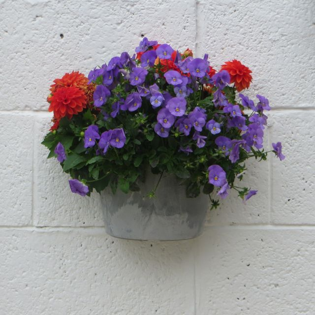 Wall planter from Artstone in one of our customer's gardens.