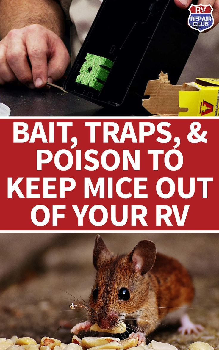 Bait Traps And Pet Friendly Tips To Get Rid Of Mice In An Rv Getting Rid Of Mice Catch A Mouse Pest Control