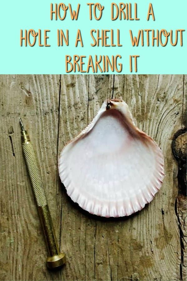 Learn how to drill a hole in a seashell with a simple tool you can purchase from...