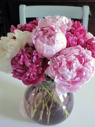 I love fresh flowers in my kitchen and these peonies are awesome