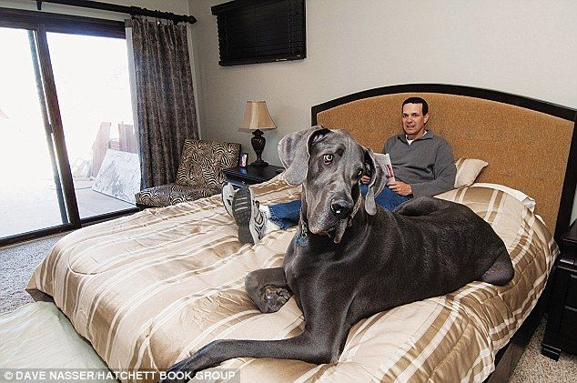 World's Tallest Dog | ... of World Records' 'Worlds Tallest Dog Ever' | DogVacay Official Blog
