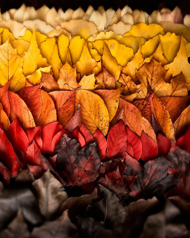 Autumn leaves gradient, ombré. Photo by Treetop Photo Shop. treetopphotoshop.etsy.com