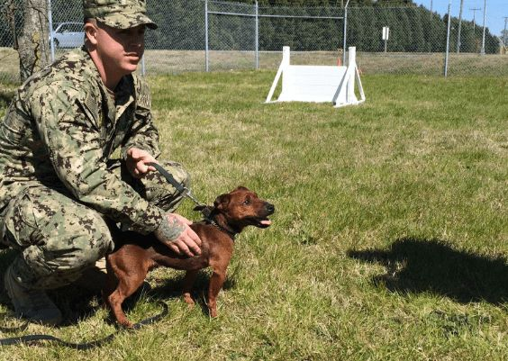 Size doesn't matter to one tiny Military Working Dog who's tasked with patrolling the world's largest naval base in search of narcotics!