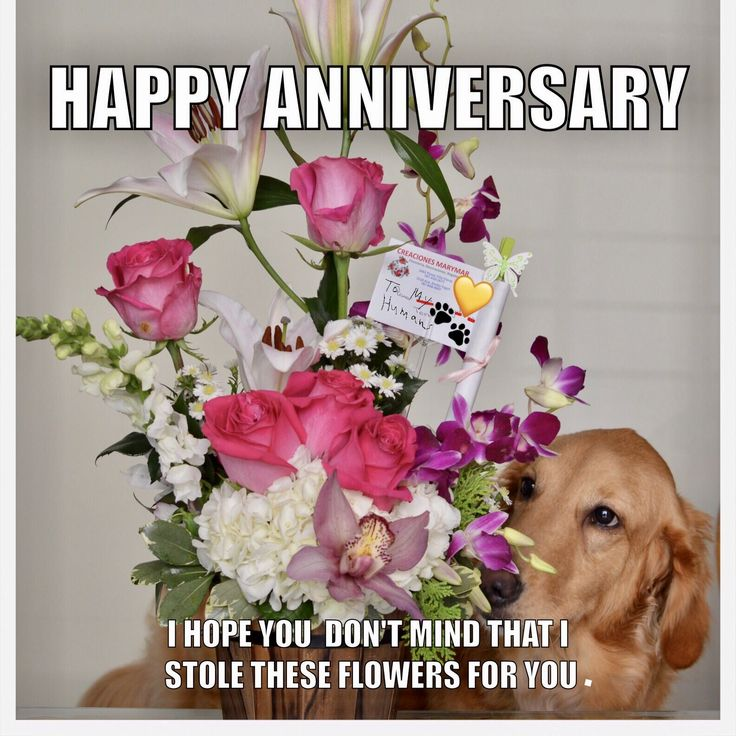 Best 25 Anniversary Quotes For Wife Ideas On Pinterest: 25+ Best Ideas About Happy Anniversary Wife On Pinterest