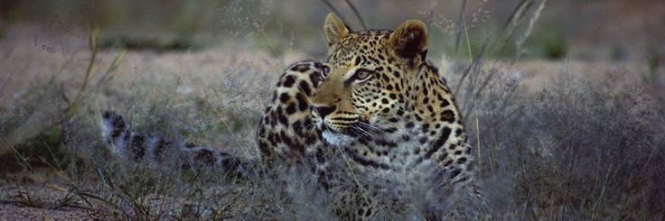 OKONJIMA BUSH CAMP wildlife