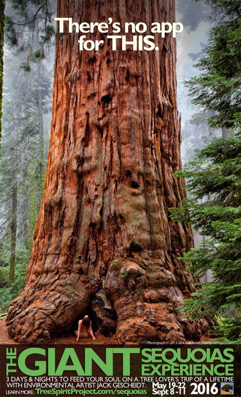 "Spend 3 days w. environmental artist Jack Gescheidt, among CA's giant sequoias — the largest trees on Earth — and star in your OWN ""TreeSpirit"" photographs.  Learn more: http://www.TreeSpiritProject.com/sequoias"