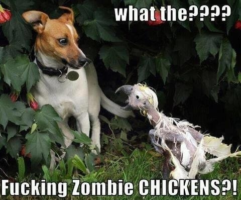 What the????: Animals, Dogs, Funny Stuff, Humor, Funnies, Zombie Chickens, Funny Animal, Zombies