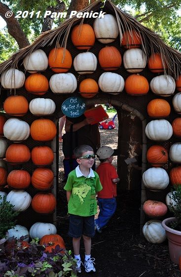 Backyard Pumpkin Patch Party : Fairy tale Halloween at Dallas Arboretum pumpkin patch