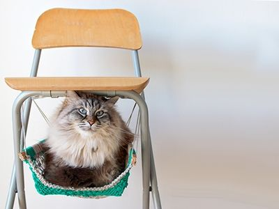 Click to enlarge image cat-hammock.jpg