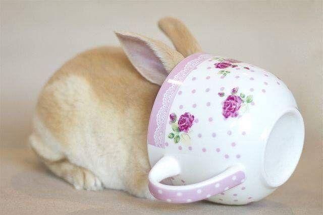кролики в кружках картинки очень довольны
