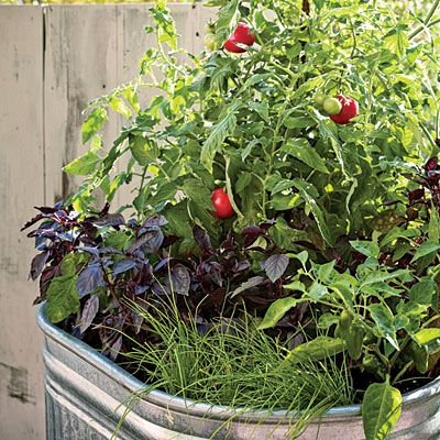 Not everyone has the room or time for a big edible garden. But even if you're limited to a lone container, you can still enjoy a summer's worth of homegrown produce for pasta, Gazpacho, and even garden-fresh Bloody Marys.