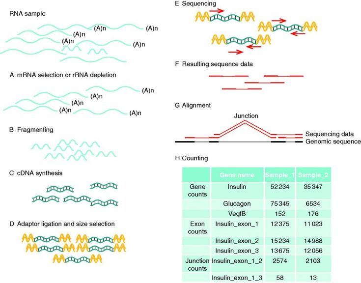 RNA sequencing – current and prospective uses in metabolic research | RNA-Seq Blog