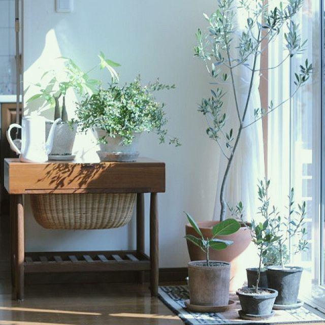 kurumin5さんの、植物のある暮らし,北欧ヴィンテージ家具,月兎印,モスポット,模様替え,北欧,リビング,のお部屋写真