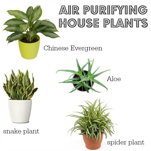 17 best images about green living on pinterest healthy for Good plants to have indoors
