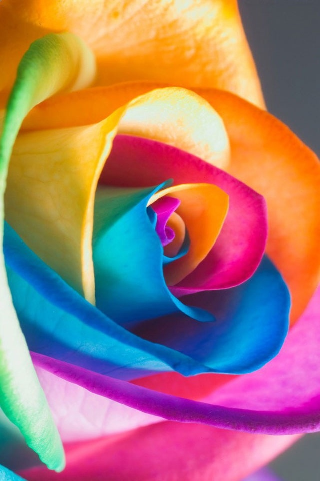 Rainbow Flower www.missdinkles.com