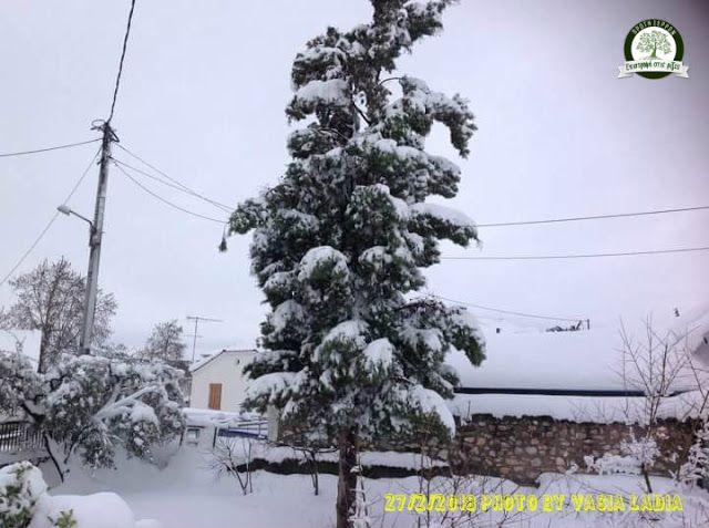 Δημιουργία - Επικοινωνία: Πρώτη Σερρών : Μες στον χιονιά από  γειτονιά σε… γ...