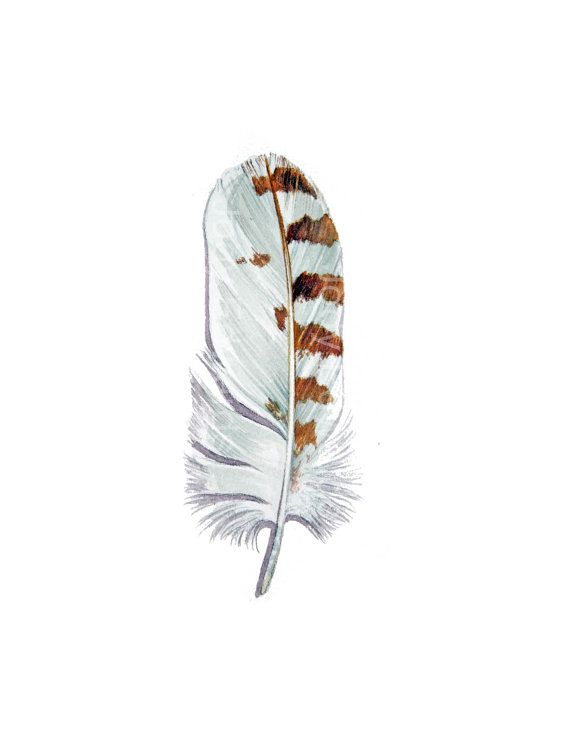 Snowy Owl Feather  Original Watercolor Feather Study by jodyvanB, $45.00
