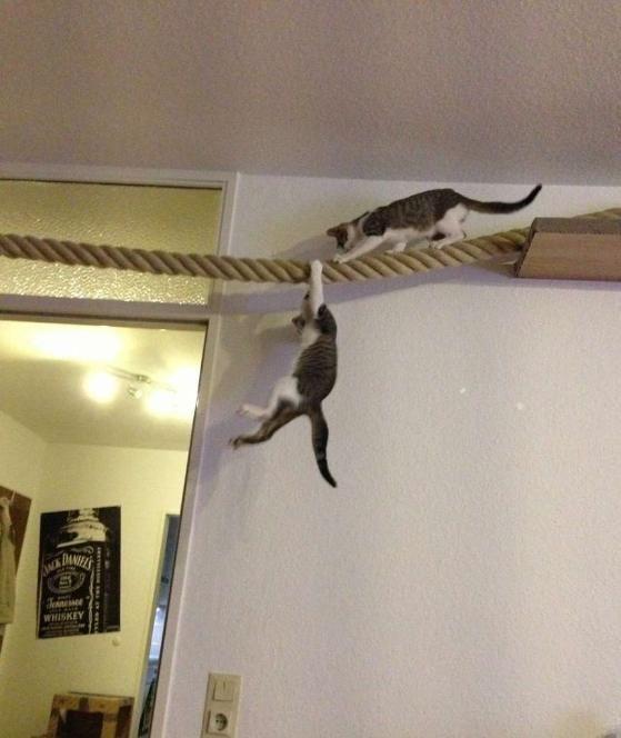 Taudeko – Katzensachen