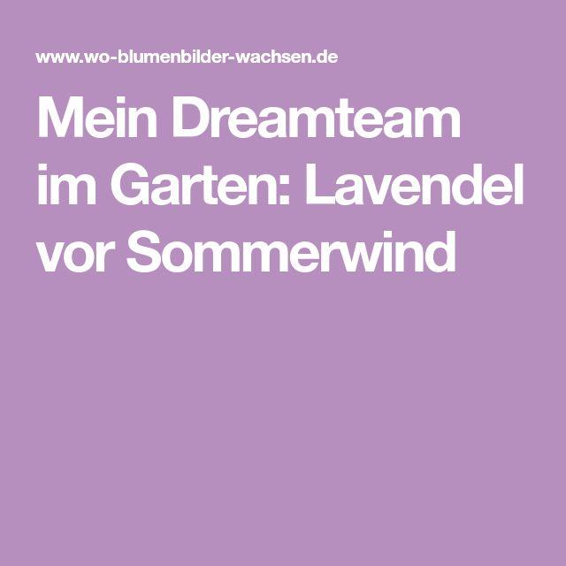 Mein Dreamteam im Garten: Lavendel vor Sommerwind