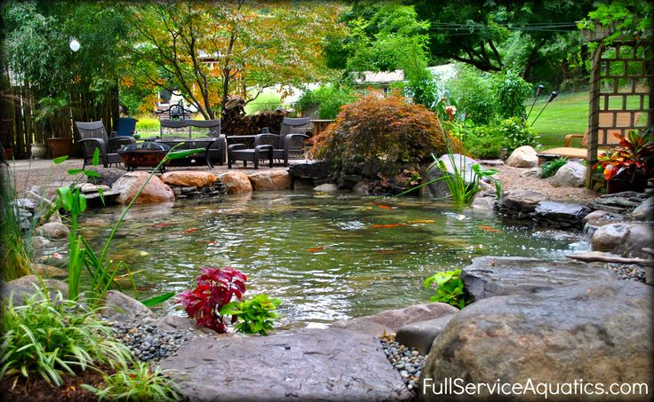 Koi pond next to outdoor living area designed and for Koi pond next to pool