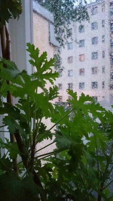 Sadekesä