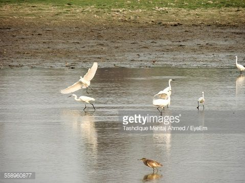 Stock Photo : Birds Walking By Lakeshore