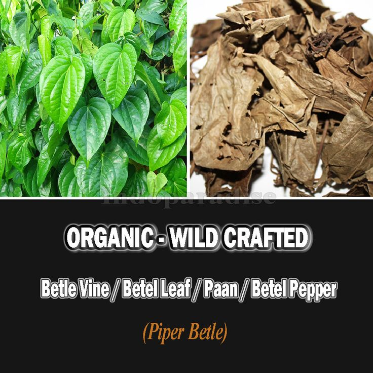 Digestion, oral hygiene, bad breath, cough, cold, pharyngitis, tonsillitis, throat infections, anti-bacterial, diabetes, controlling blood sugar, gastric ulcers, indigestion, bloating, headache, detoxification properties, wound healing, insect bites, boils, warts, oral cancer, anti- oxidant, erectile dysfunction, acne, allergies. #betelleaves #driedherbs #herbalremedies