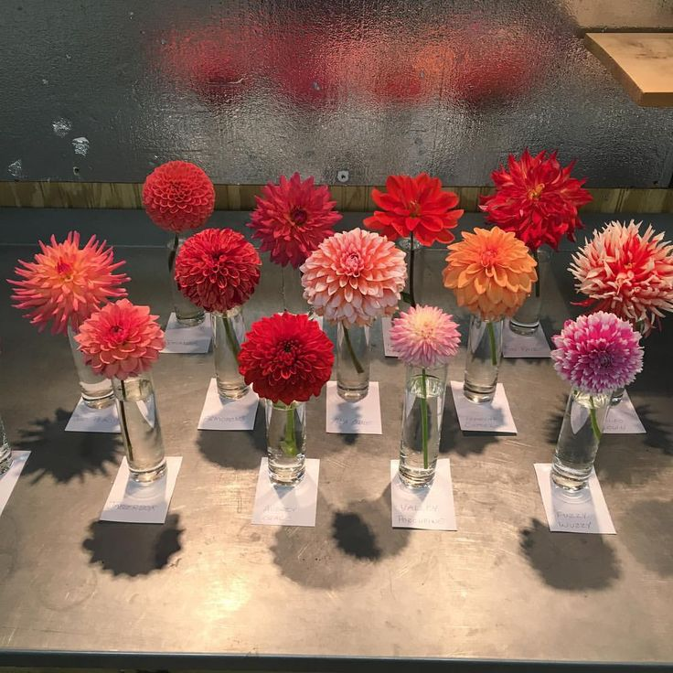 post prettiest dahlia escort cards