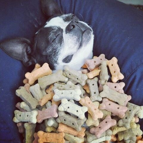 heaven: Funny Pictures, Dogs Heavens, Happy Places, Boston Terriers, Happy Dogs, Dogs Funny, Sweet Dreams, Dreams Coming True, Animal