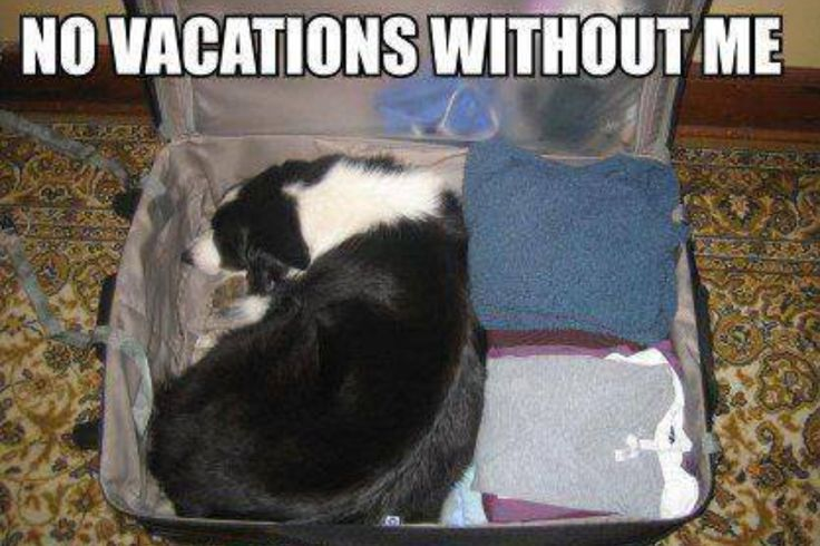 """""""No vacations without me."""" ~ Dog Shaming shame - Border Collie - Who says dogs are dumb?!!"""