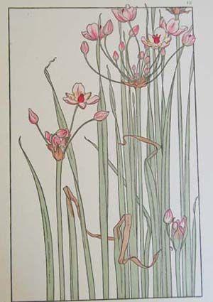 J. Foord Art Nouveau Flowers and Plants Circa 1906, Chromlithographs