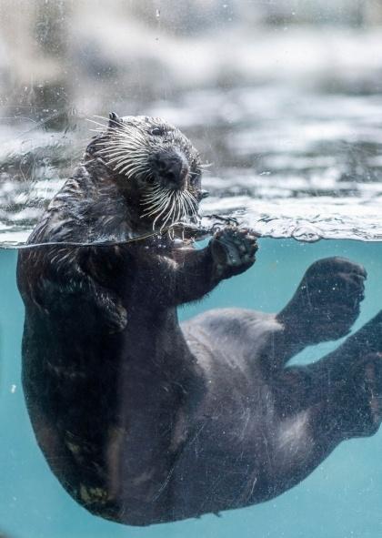 Vancouver Aquarium, Stanley Park. By colink.