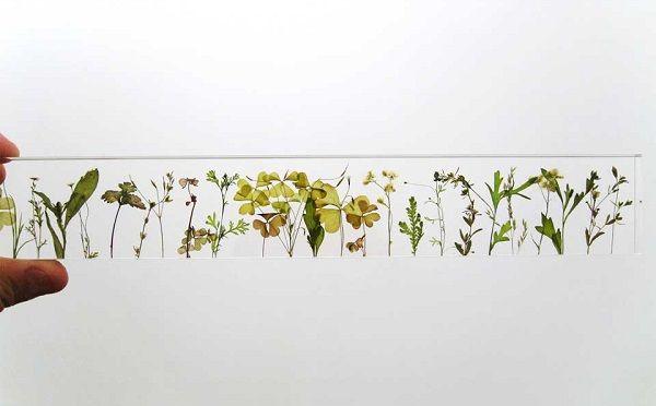 草花でモノの長さを測ってみよう♪とっても素敵な30cm定規とは?   ガジェット通信