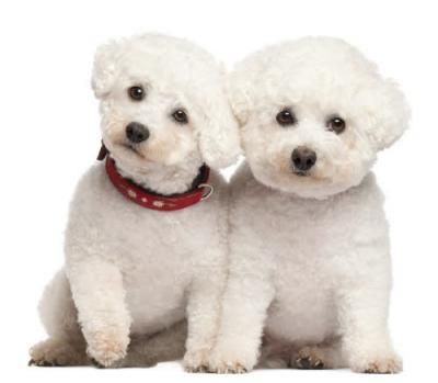 Honden & kids?
