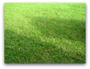 We've got 12 great sections on lawn problems from renovating or replacing to repairing.