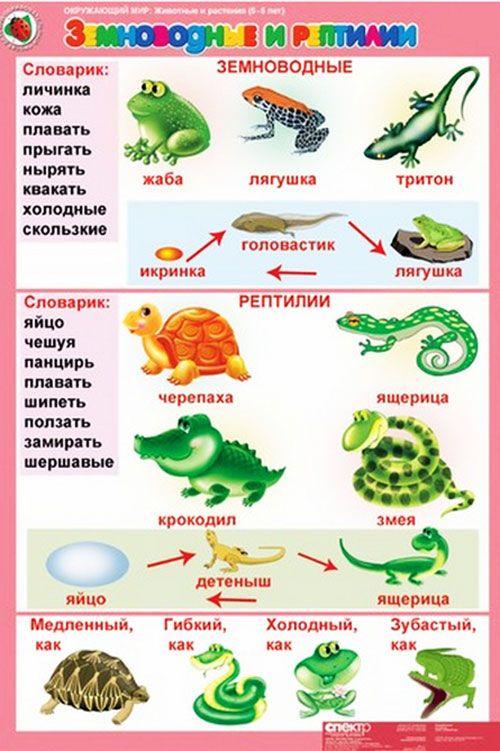 kartoshki_dla_obusheniya3
