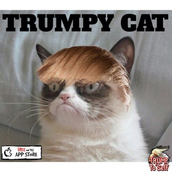 grumpy cat does not - photo #41
