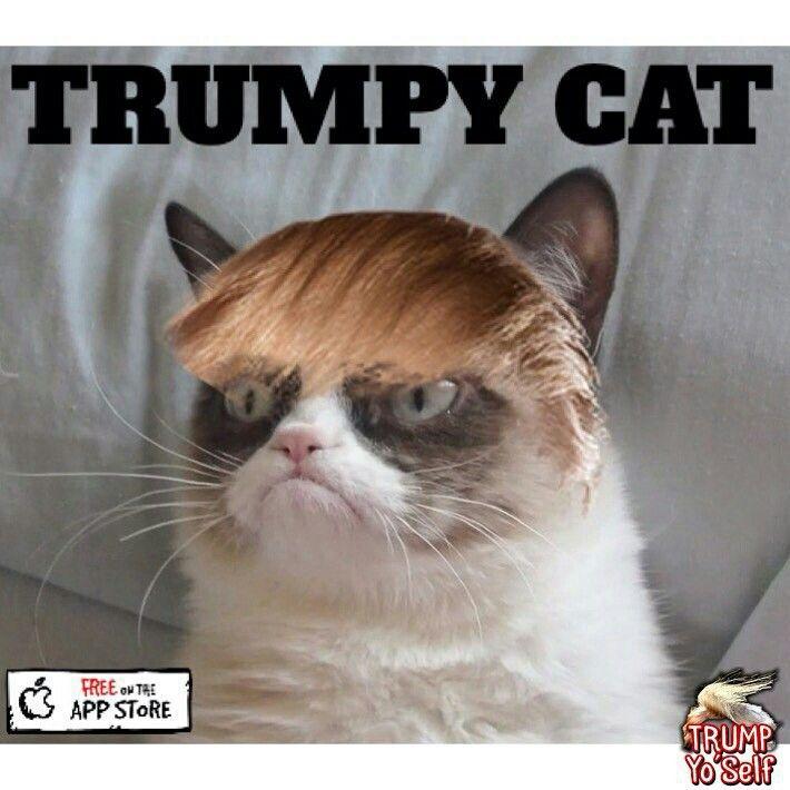 J'avais demandé au coiffeur un dégradé pas une frange.... Maintenant on va me prendre pour le fils de Trump!!!