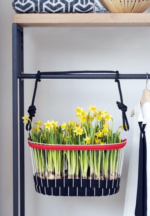 Toll Groen Wonen   De Narcis Brengt Het Voorjaar In Huis + DIY Tip! U2022 Stijlvol