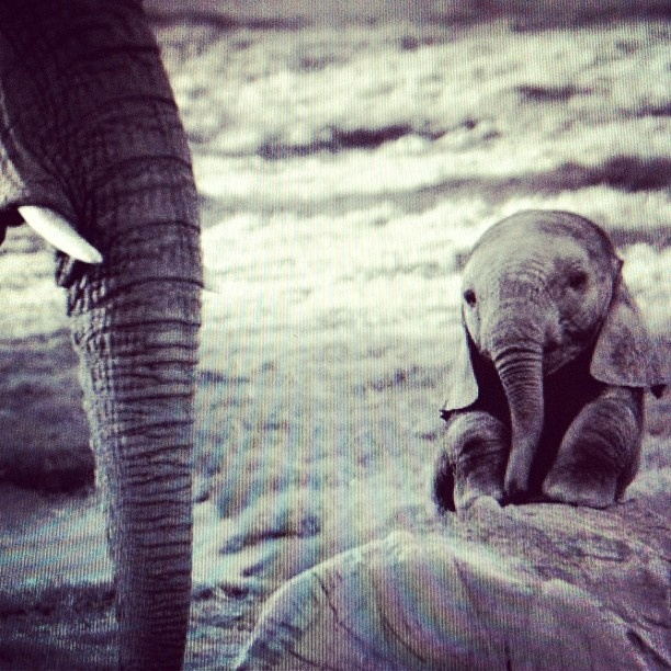 she has no mama cause the poachers killed her